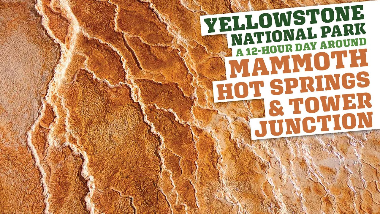 Yellowstone National Park Mammoth Hot Springs Roosevelt Tower In 12ish Hours Youtube