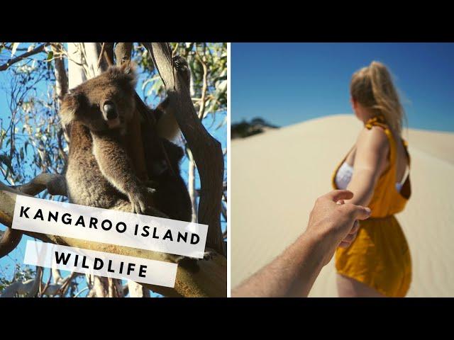 Finding Koalas on Kangaroo Island | Kangaroo Island Vlog #3