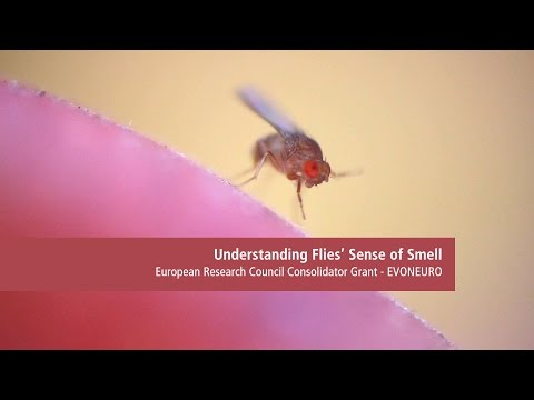 Understanding flies' sense of smell - EURESEARCH/UNIL