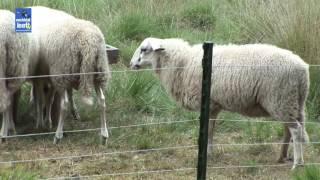 Werk van een schaapherder