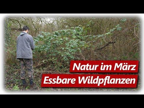 nahrung-aus-der-natur- -essbare-wildpflanzen-teil-1