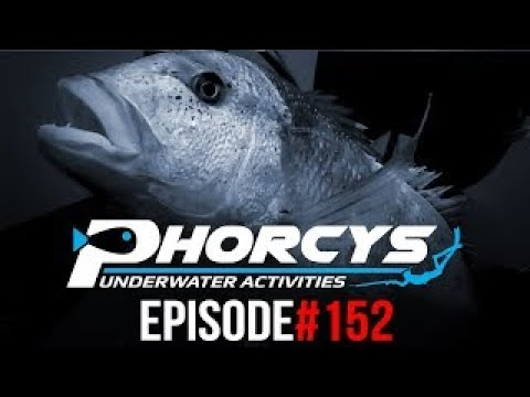🐟 PHORCYS Spearfishing Worldwide Videos 🌍 #152 - Underwater Activities 2019