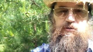 Лечебное варенье из сосновых шишек