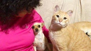 Jealous Dog vs Loving Cat
