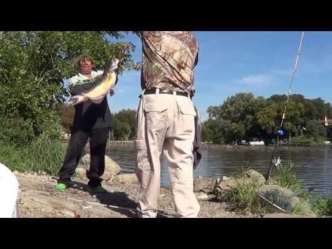 . cat and carp fishing   pesca de bagres  y carpas en el foxriver