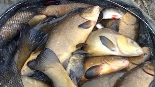 Tench Fishing In Winter. Chopped worm on the pole.