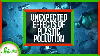 SciShow: Unaffected Effects of Plastic Pollution thumbnail