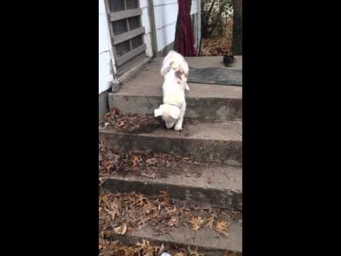 Deaf And Blind Puppy Uses Steps For First Time