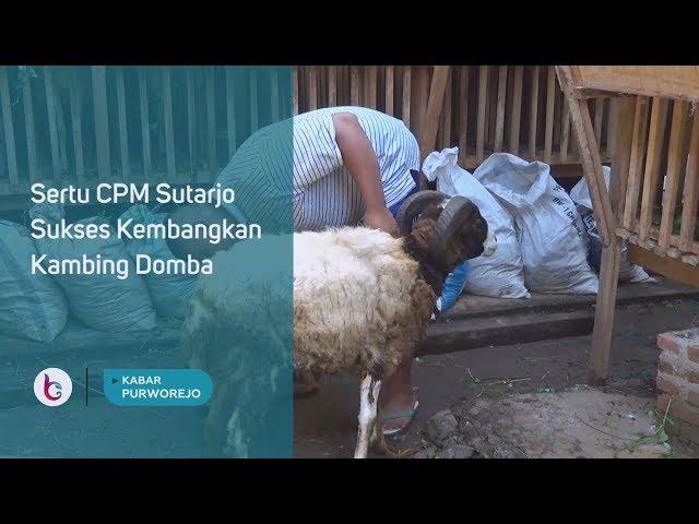 Sertu CPM Sutarjo Sukses Kembangkan Kambing Domba