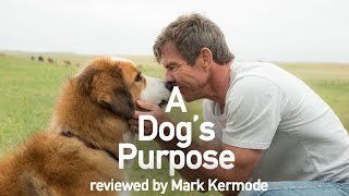 A Dog's Purpose reviewed by Mark Kermode