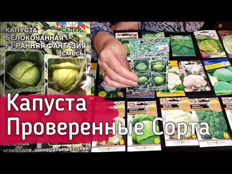 Семена капусты. Супер новинки и проверенные сорта капусты.