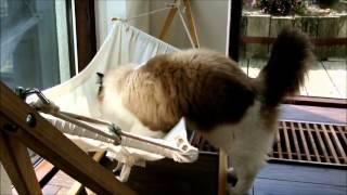 Даже у кота есть свой гамак