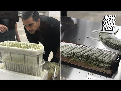 This machine rolls 100 joints in five minutes | New York Post