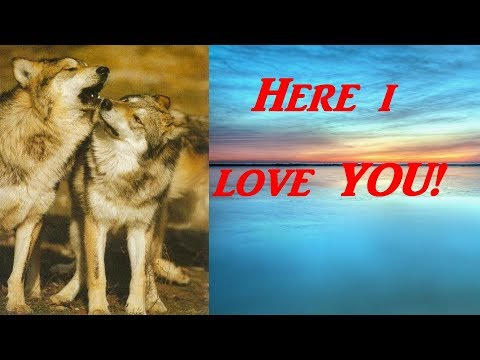 Here I Love You by Pablo Neruda (read by Graywolf)