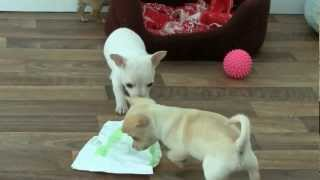 April 14, 2012 in the puppy house.wmv