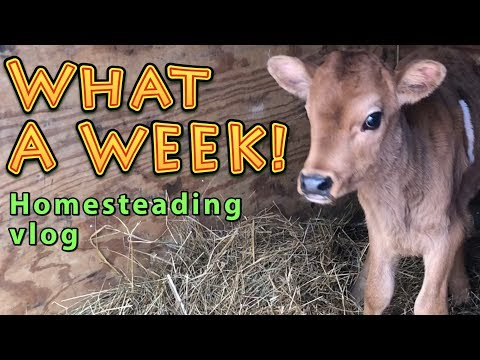 What A Week   A Big Family Homesteading Vlog