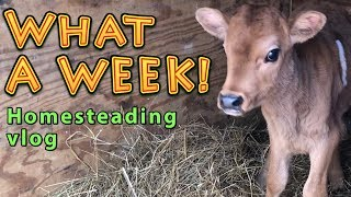 What A Week | A Big Family Homesteading...