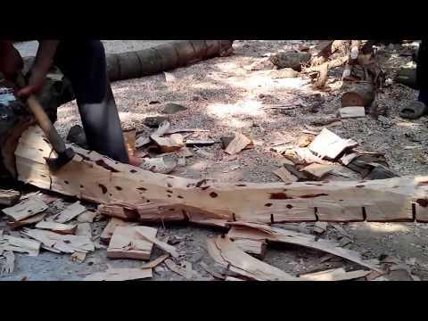 quy trình khai thác lõi cây sưa đỏ, sản phẩm mỹ nghệ gỗ sưa. GOSUADO.COM
