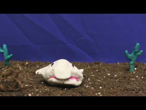 Baby Blobfish