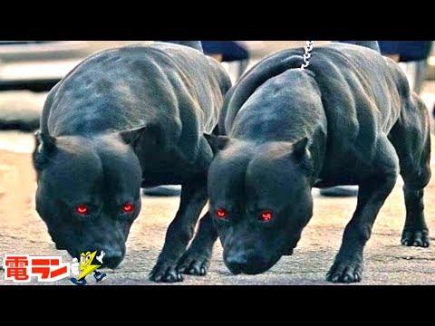 【衝撃】世界の巨大すぎる番犬8選
