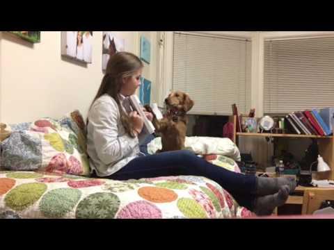 diabetic-alert-dog---live-alert---80