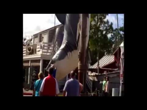jaws in amity island before  closing the  jaws ride orlando universal studio