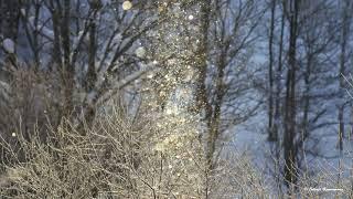 ダイヤモンドダスト&サンピラー 黄金に輝く霧氷と共に 2020