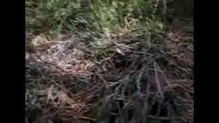 Черноголовцы (польский гриб). Рецепты маринования польского гриба
