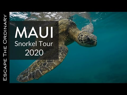 The Best Snorkeling Spots in Maui Po&39;olenalena 5 Graves Honolua Bay & Ahihi Natural Reserve