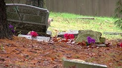 "State involved in ""dead squirrel mystery"" at Mount Washington Cemetery"