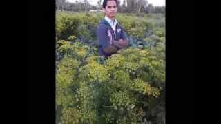 Bangla.xxx