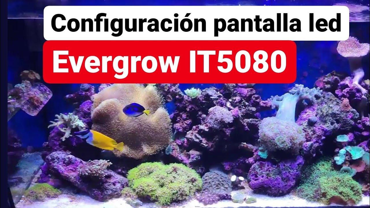 Configuración PANTALLA LED EVERGROW IT5080 en mi ACUARIO MARINO