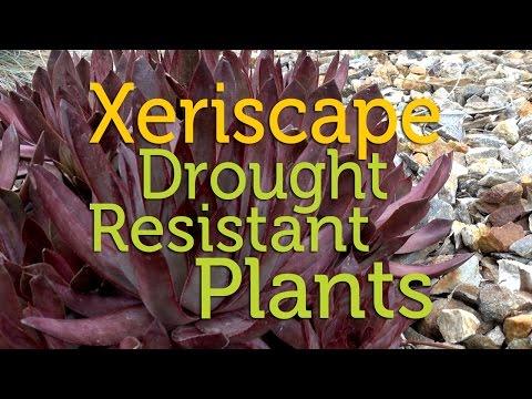 Xeriscape Gardening: Drought Resistant Plants