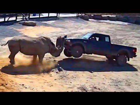ЯРОСТЬ ТИТАНОВ! На что способны самые гигантские животные!