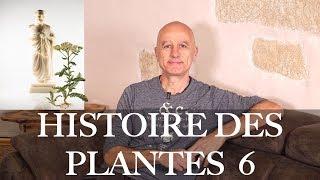 Histoire des plantes épisode 6 : galénistes contre paracelsiens