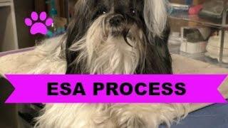 How to Make a Dog an Esa
