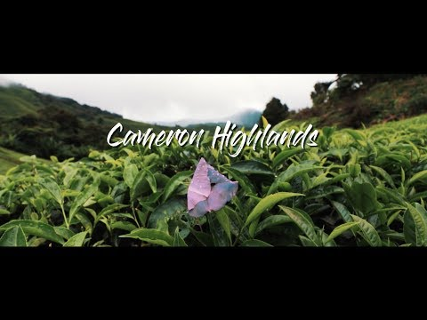 Cameron Highlands - A Cinematic Experience