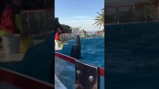 イルカのジャンボ.