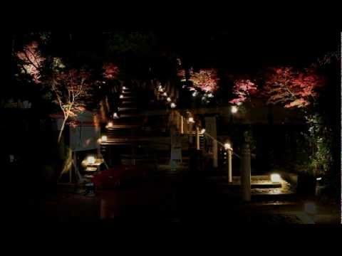 Autumn Night Illumination at Chion-in Temple, Kyoto 【HD】