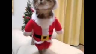 Fune cat