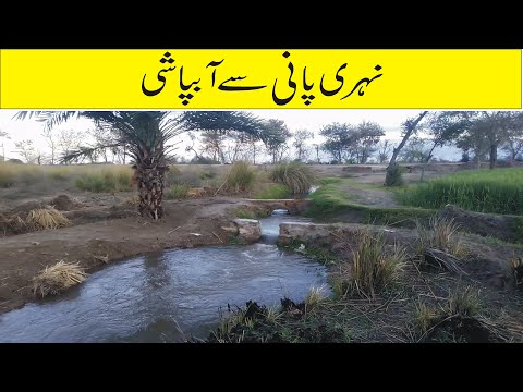 Flowing water From Canal | For Irrigation In Desert area | Saqafat