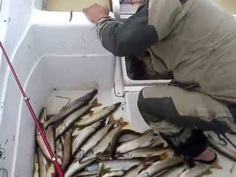 Вот так рыбачат в Камне-на-Оби