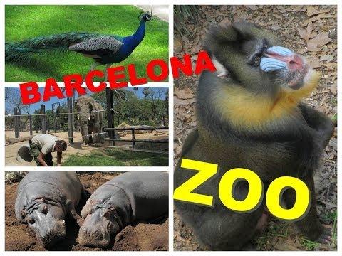 барселона зоопарк видео