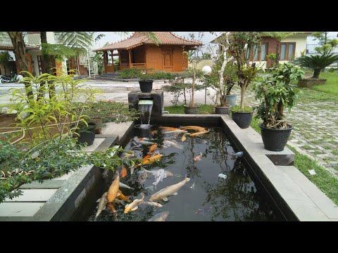 Kolam ikan koi minimalis depan rumah - joglo mudal - halaman belakang
