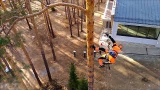 Обработка сосен от короеда с подъемом альпиниста на дерево. Сысерть, Свердловская область