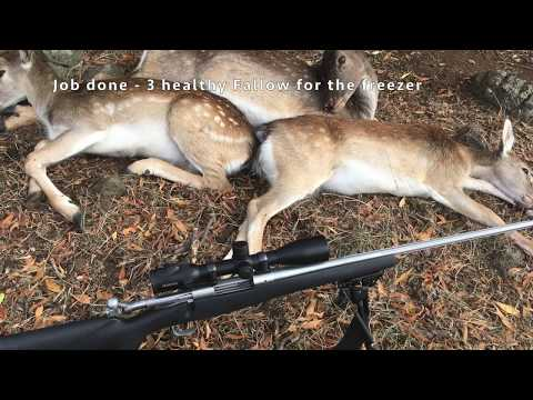 Western Vic - Fallow Deer Meat Run