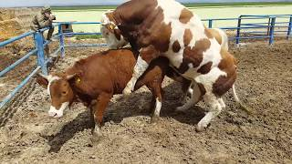 Funyy Farm Clup S01E02 - FUNNY FARM CLUP