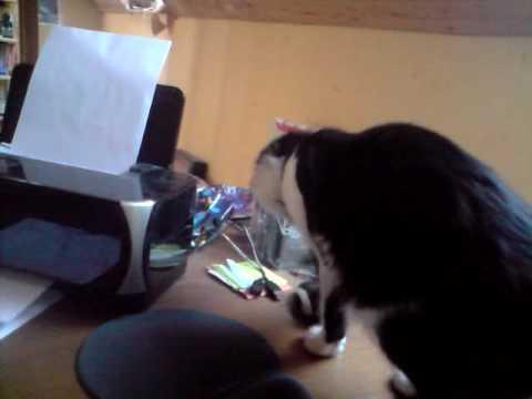 Cat curious about printer