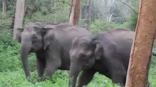 Elephants got disturbed by tourist vehicle @ Bandipur National Park