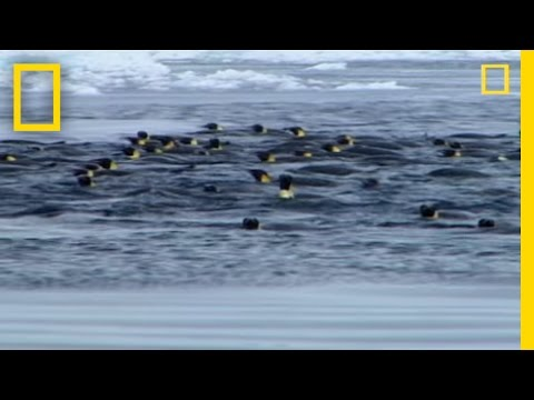 Penguins vs. Leopard Seal - YouTube